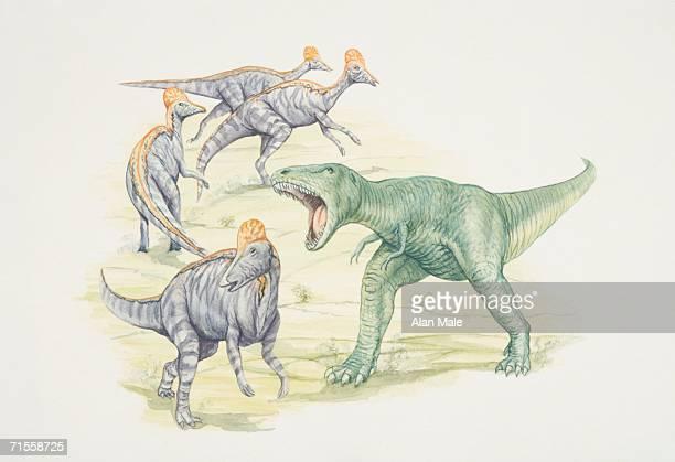 tyrannosaurus attacking a group of corythosaurus duck-billed dinosaurs. - hadrosaurid stock illustrations, clip art, cartoons, & icons
