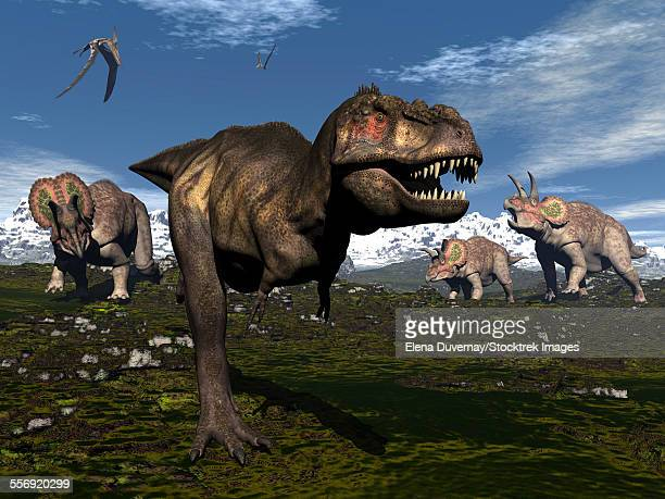 Tyrannosaurus rex attacked by three Triceratops.