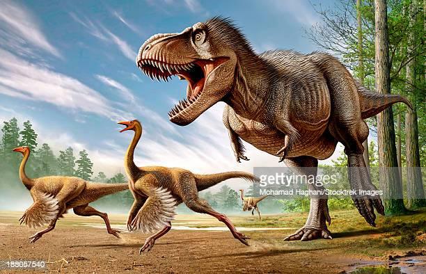ilustraciones, imágenes clip art, dibujos animados e iconos de stock de tyrannosaurus rex attacking two struthiomimus dinosaurs. - paleobiología