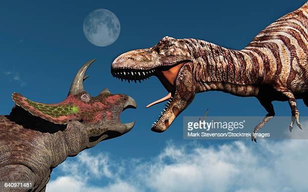 Tyrannosaurus rex confronting a Triceratops.