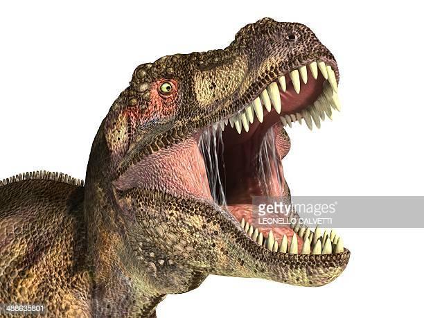tyrannosaurus rex dinosaur, artwork - paleontology stock illustrations
