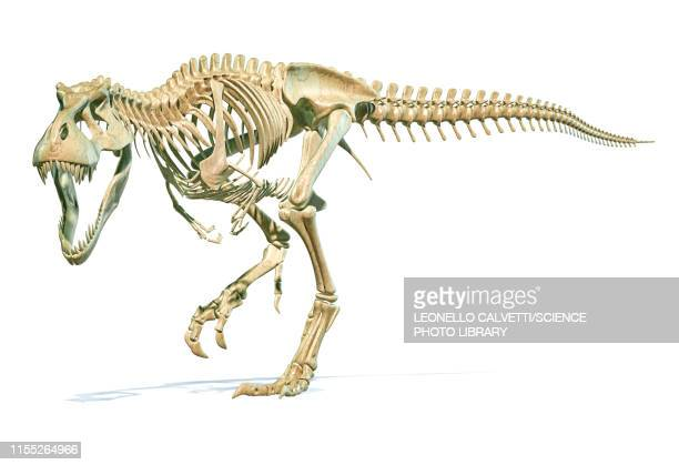 ilustraciones, imágenes clip art, dibujos animados e iconos de stock de tyrannosaurus rex dinosaur, illustration - paleontología