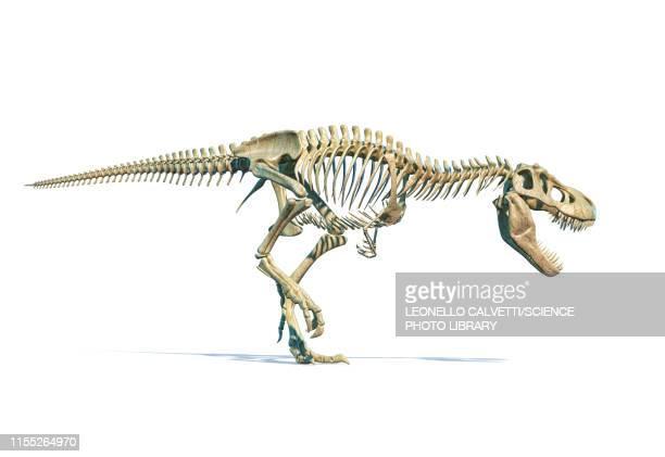 tyrannosaurus rex dinosaur, illustration - the past stock illustrations