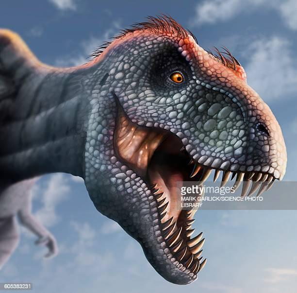 tyrannosaurus rex head, illustration - scavenging stock illustrations