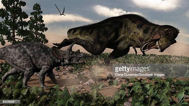 Tyrannosaurus rex roaring at a Triceratops.