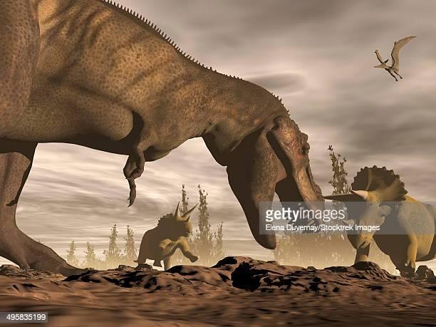 Tyrannosaurus Rex roaring at two Triceratops on rocky terrain.