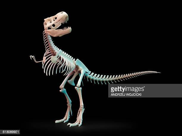 tyrannosaurus rex skeleton, artwork - animal skeleton stock illustrations, clip art, cartoons, & icons
