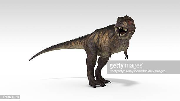 tyrannosaurus rex, white background. - talon stock illustrations