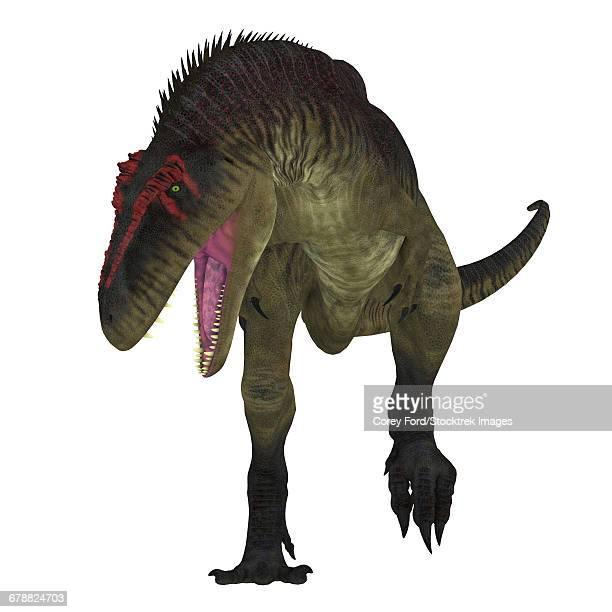 ilustraciones, imágenes clip art, dibujos animados e iconos de stock de tyrannotitan dinosaur on white background.  - paleozoología