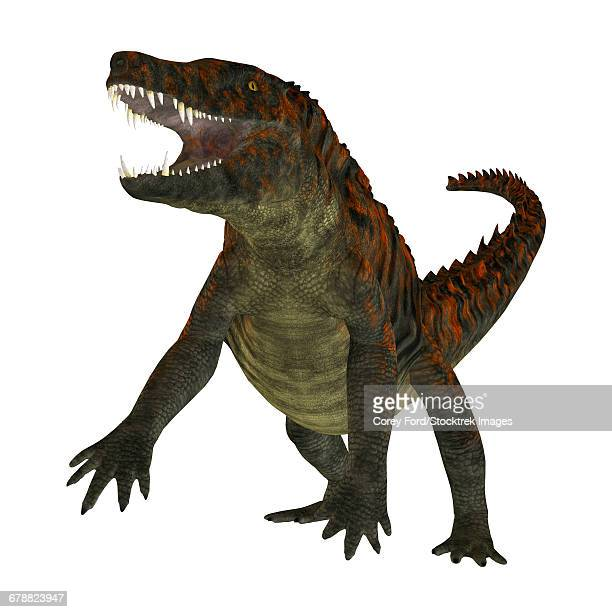 Uberabasuchus on white background.