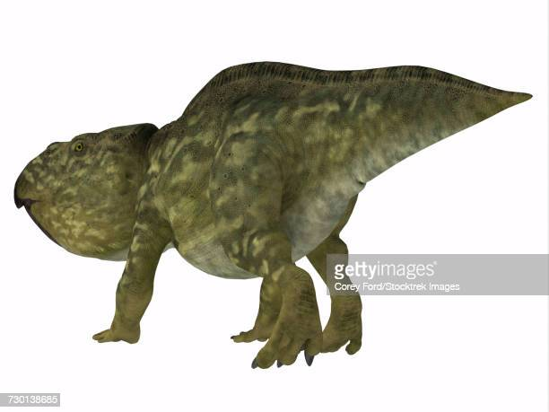 Udanoceratops dinosaur.