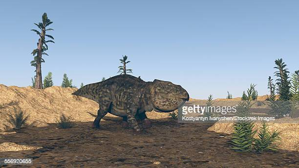 ilustraciones, imágenes clip art, dibujos animados e iconos de stock de udanoceratops walking in muddy water. - paleozoología