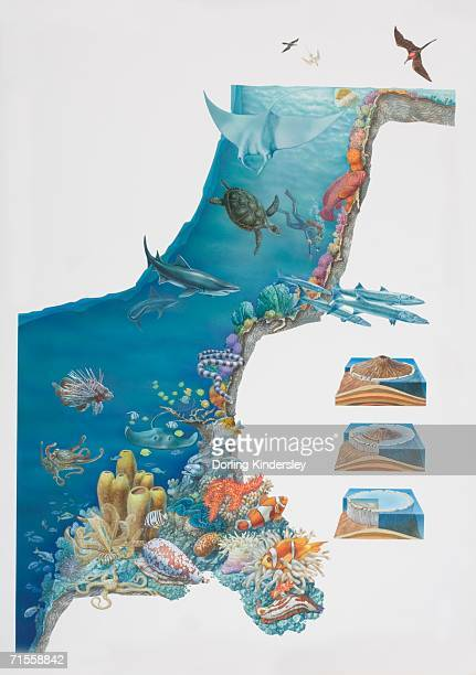 ilustraciones, imágenes clip art, dibujos animados e iconos de stock de underwater scene depicting various animal species inhabiting coral reef. - era prehistórica