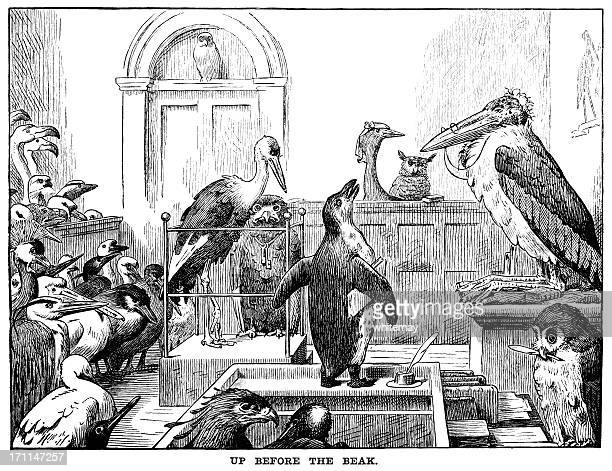 up before the beak - punch's almanack, 1882 - courthouse stock illustrations, clip art, cartoons, & icons