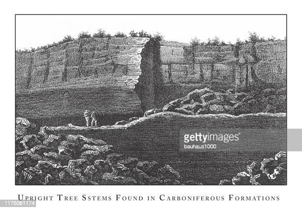upright tree stems found in carboniferous formations, caves, icebergs, lava and rock formations engraving antique illustration, published 1851 - isle of staffa stock illustrations, clip art, cartoons, & icons
