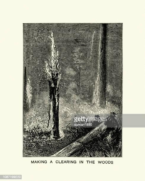 ilustraciones, imágenes clip art, dibujos animados e iconos de stock de uso de fuego para hacer claro en el bosque, california 1884 - incendio forestal