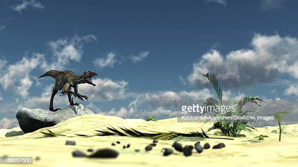 utahraptor bellows a loud roar while standing atop a rock. - dromaeosauridae stock illustrations