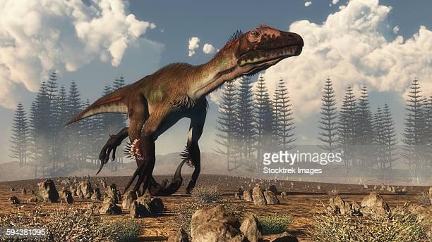 utahraptor dinosaur running in the desert with a calamite forest in the background. - dromaeosauridae stock illustrations