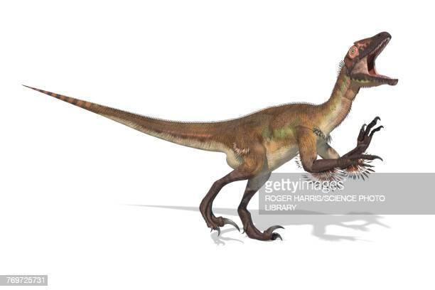 utahraptor dinosaur skeleton, illustration - dromaeosauridae stock illustrations