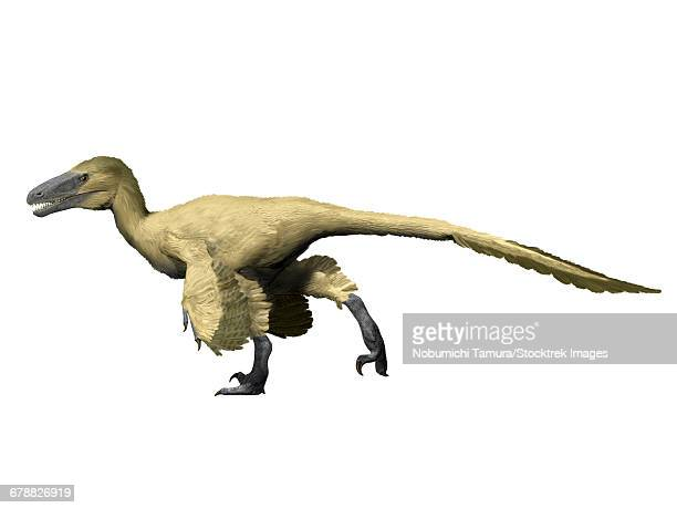 Utahraptor is a theropod from the Early Cretaceous period.