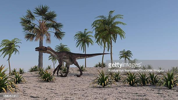 utahraptor roaming a prehistoric environment. - dromaeosauridae stock illustrations