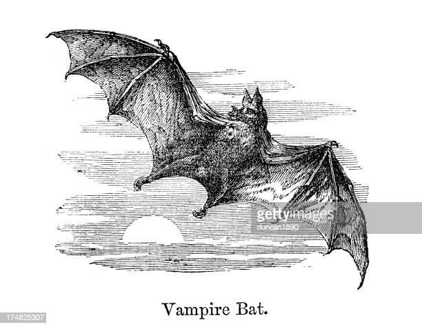 vampire bat - vampire stock illustrations