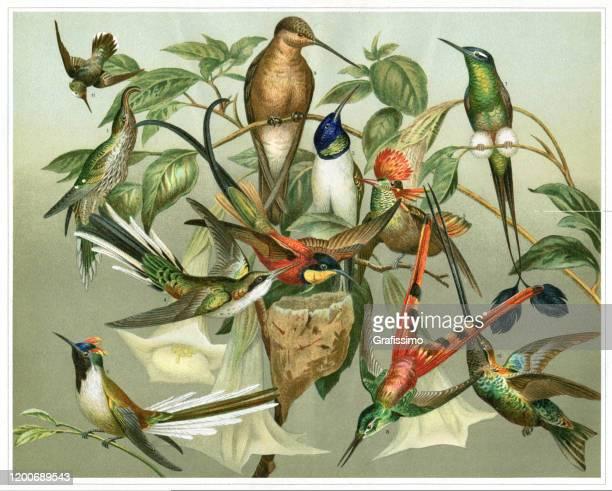 variation of colourful hummingbird illustration - bird stock illustrations