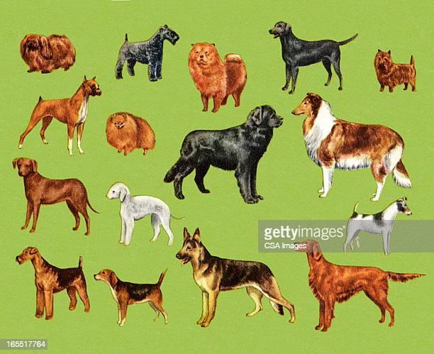 ilustraciones, imágenes clip art, dibujos animados e iconos de stock de variedad de perros - grupo grande de animales