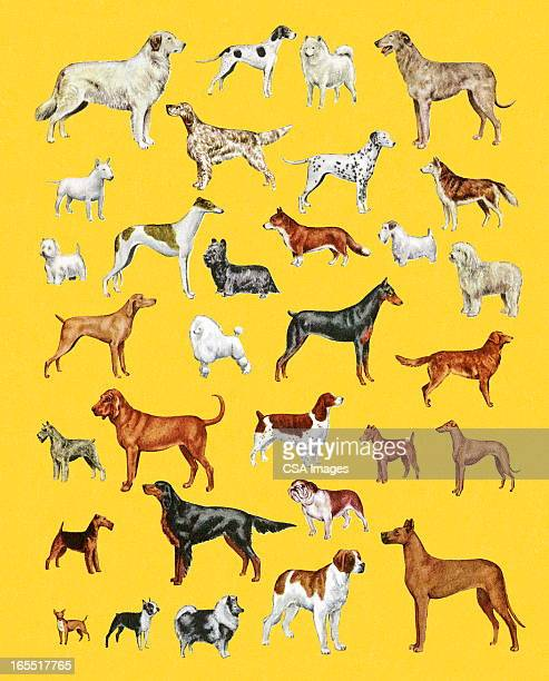 variety of dogs - purebred dog stock illustrations