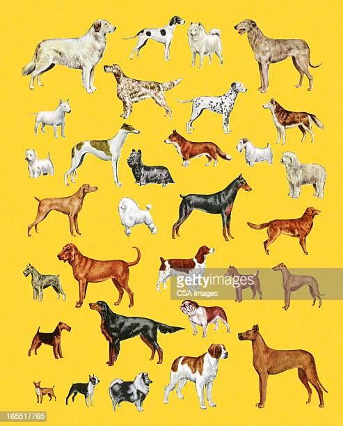 ilustraciones, imágenes clip art, dibujos animados e iconos de stock de variedad de perros - galgo