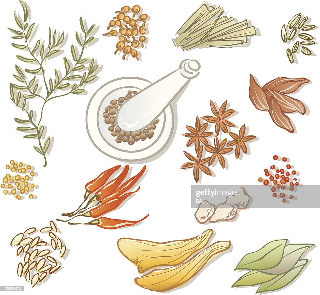 Variety types of spices, high angle view : Vector Art
