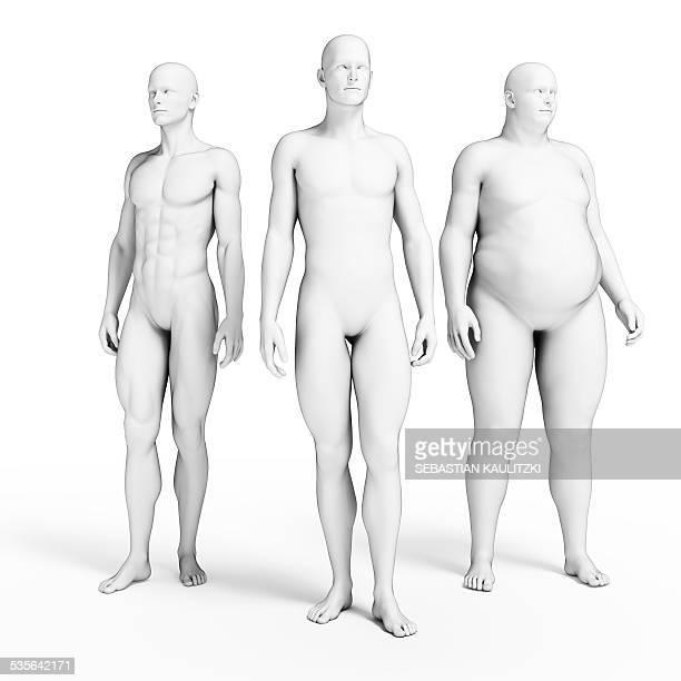Various body shapes, illustration