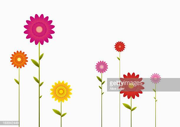 various colors and sizes of gerbera daisies in a row - growth stock illustrations