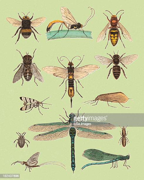 various flying insects - bumblebee stock illustrations, clip art, cartoons, & icons