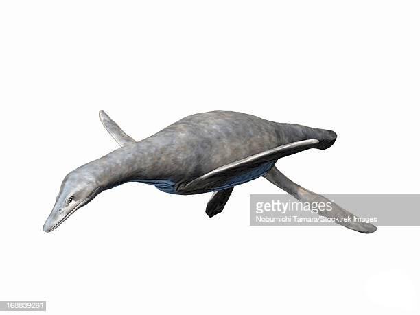 ilustraciones, imágenes clip art, dibujos animados e iconos de stock de vectocleidus pastorum, early cretaceous of england. - plesiosaurio