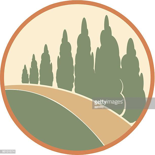 vector cedar trees-color - cypress tree stock illustrations