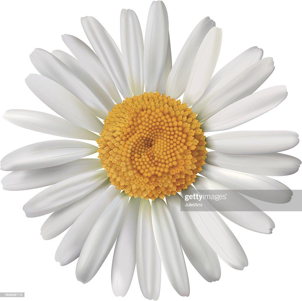 Vector daisy