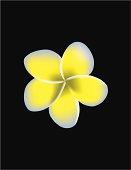 Vector Plumeria Flower