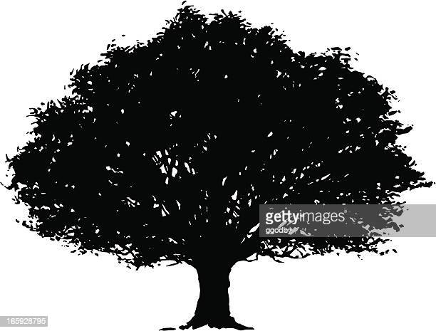Vektor Baum Silhouette