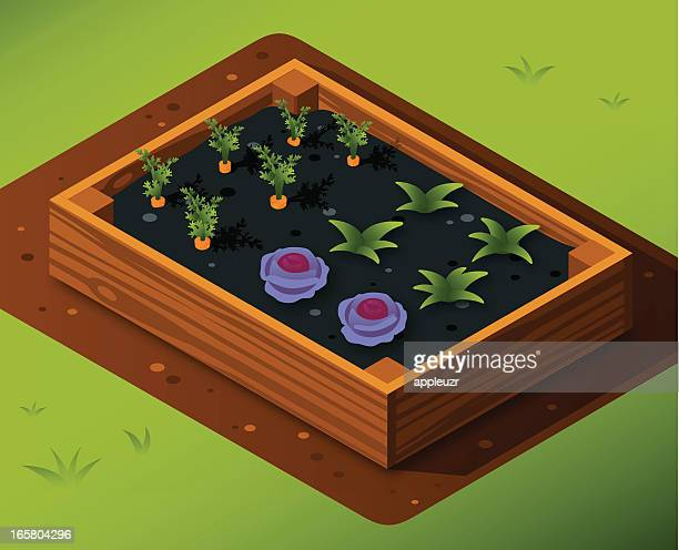 vegetable garden box with carrots and cabbage - red cabbage stock illustrations, clip art, cartoons, & icons