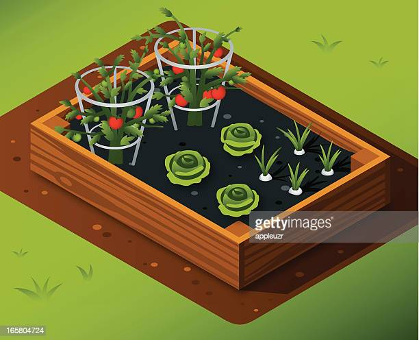 vegetable garden with tomatoes, lettuce and garlic - vegetable garden stock illustrations, clip art, cartoons, & icons