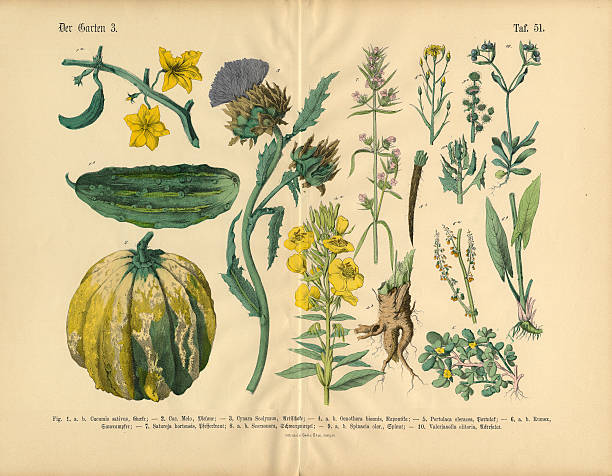 Vegetables And Flowers Of The Garden, Victorian Botanical Illustration Wall Art