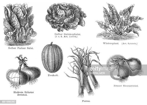 Vegetables engraving 1895