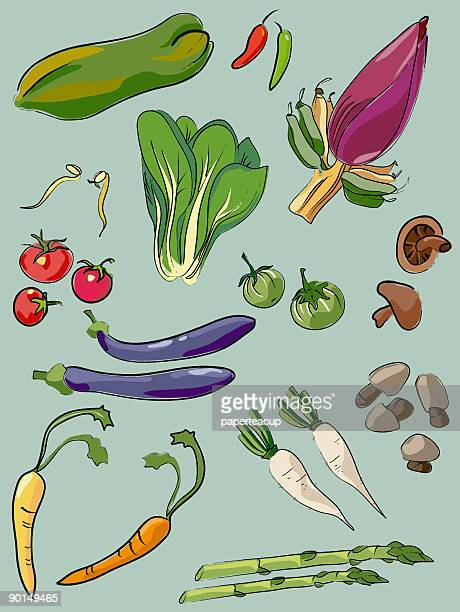 ilustrações, clipart, desenhos animados e ícones de legumes - bok choy