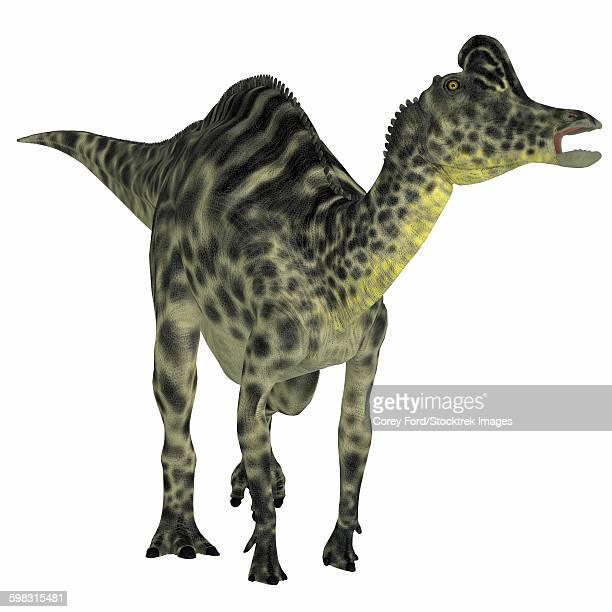 velafrons duck-billed dinosaur. - hadrosaurid stock illustrations, clip art, cartoons, & icons