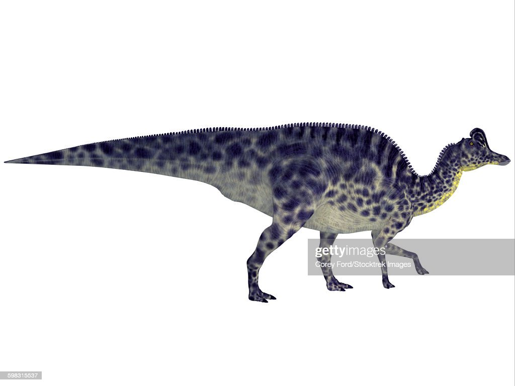 Velafrons duck-billed dinosaur. : stock illustration