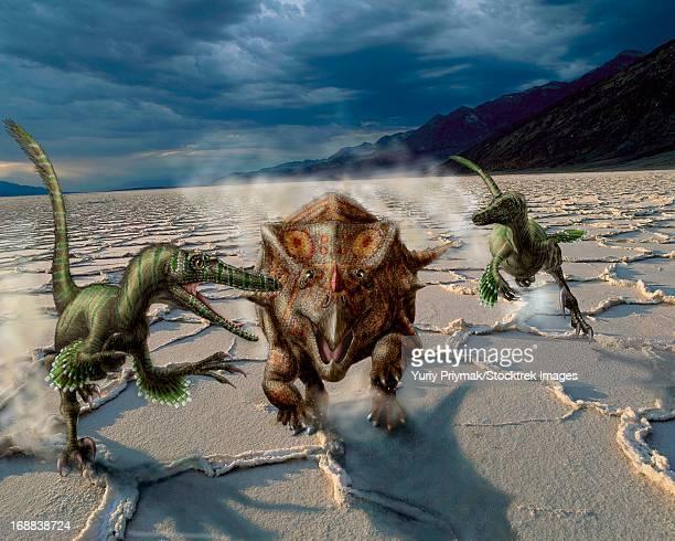 velociraptor chase a bagaceratops in a prehistoric desert. - velociraptor stock illustrations