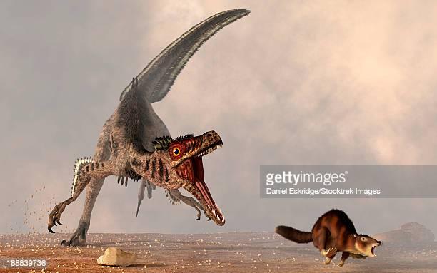 ilustraciones, imágenes clip art, dibujos animados e iconos de stock de a velociraptor chasing a rat sized mammal. - triásico