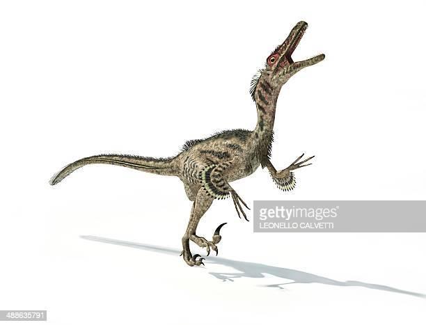 velociraptor dinosaur, artwork - dromaeosauridae stock illustrations
