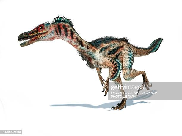 velociraptor dinosaur, illustration - paleontology stock illustrations